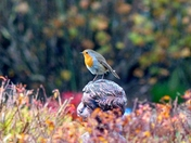 ROBIN POSING ON A STATUE IN THE GARDEN