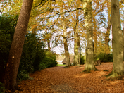 Autumn Colours at Fairhaven Woodland & Water Gardens