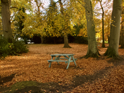 Two more images taken at Fairhaven Woodland & Water Gardens