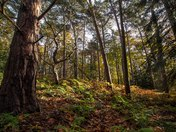 Project 52 Sheringham Woods