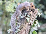 I just adore grey squirrels
