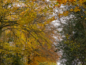 Nore Road, Portishead in its autumn colours