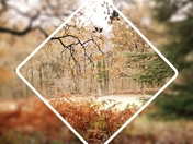 Fire of Autumn Colours