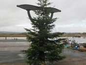 Topsham's Christmas tree