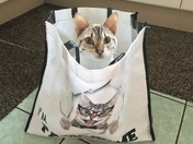Project 52..cat in a bag