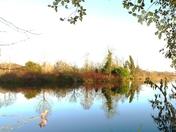 Reflecting in Culford lake.
