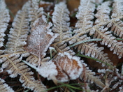 Photo Challenge.  Project 52.  Frost