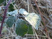 PROJECT 52, FROST, ON LEAF AS SUN RISES