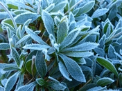 PROJECT 52, FROST, GLISTENING