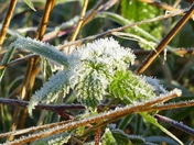 PROJECT 52, FROST. SPARKLING