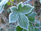 PROJECT 52, FROST. IN THE HEDGEROW