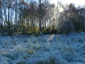 PROJECT 52, FROST, ON THE MEADOW