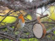 Mr Robins Christmas Meal