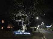 Christmas lights on a tree, on Carlton Hill