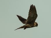 Birds in Somerset