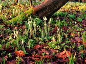 Spring in Uphill 'Donkey Field'.