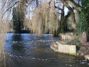 Taverham Mills