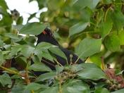 PROJ 52, HIDDEN, BLACKBIRD
