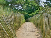 PATH TO THE PINEWOODS FROM THE BEACH AT WELLS