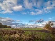 North Burlingham Fields