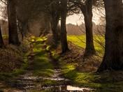 Green Lane North Burlingham