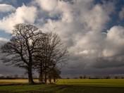 Afternoon sunshine at North Burlingham
