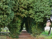 PROJ 52, ARCHES. YEW TREE ARCH AT QUEENS ROAD CEMETERY
