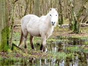 Pony paddling in the woods