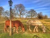 Stow bardolph Church farm horses