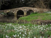Snowdrops at Walsingham