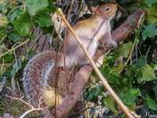 Squirrel after the storm