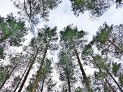 UNDER THE TREE CANOPY AT SANDRINGHAM