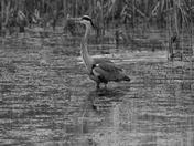 Humpday wildlife