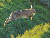 Spring is in the Hare