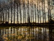 Honing reflections