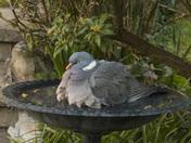 Birdbath!!