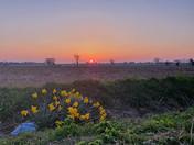 Sunset at Stalham