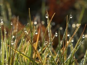 Norfolk Morning Dew