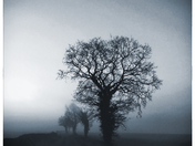 Atmospheric Morning Tree