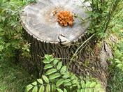 Not mushroom left