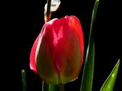 Emerging spring flowers