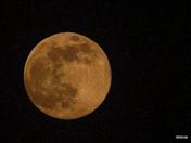 Pink Moon B