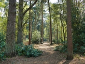 DAPPLED SHADE IN SANDRINGHAM WOODS