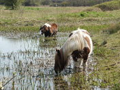 Horses at Bowthorpe