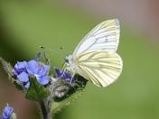 Nectar time