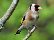 Beautiful plumage.