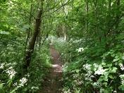Walking in Sprowston
