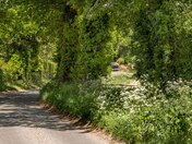 Norfolk`s Twisty Shady Lanes