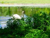 Lynford Arboretum Walk