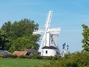 Fledgling bluetits and Saxtead mill in the sun